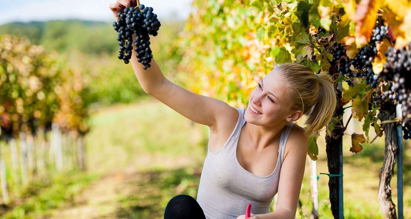 Blonde Woman Looking at Grapes at a Winery